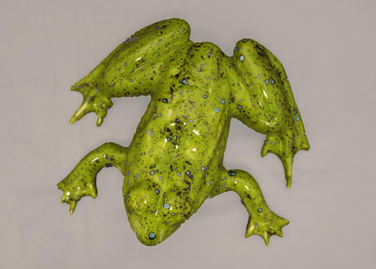 Frog L